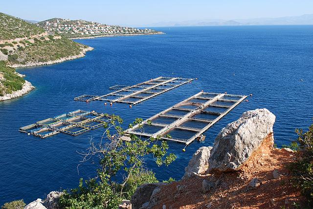 Арголикос (Арголидский залив)